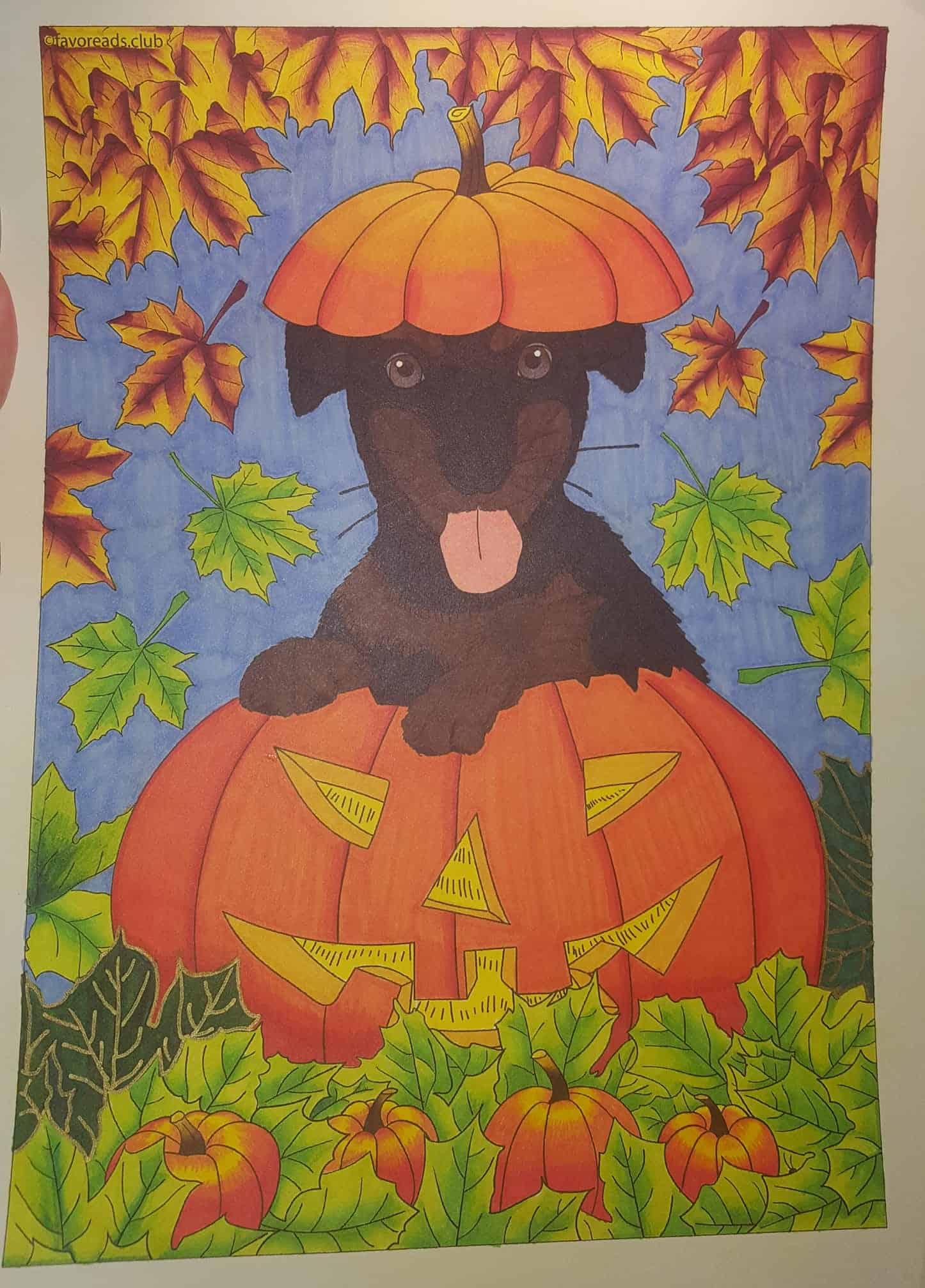 Cats and Dogs – Dog in a Pumpkin