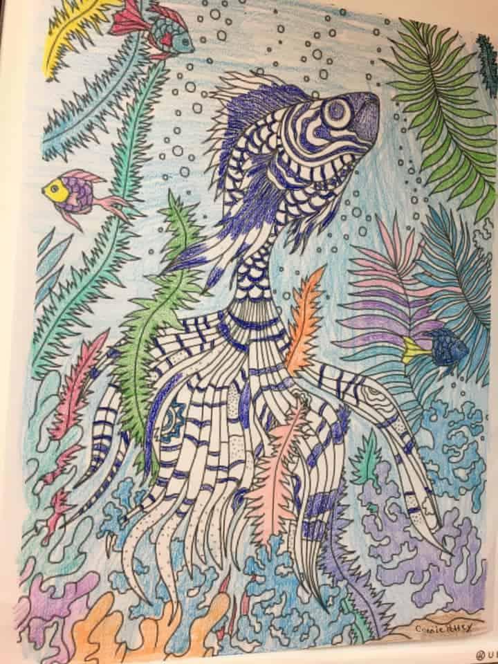 Ocean Life – Stunning Fish