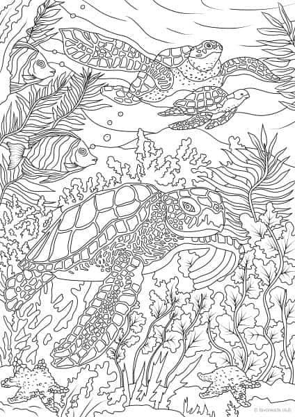 Ocean Life -  Turtles