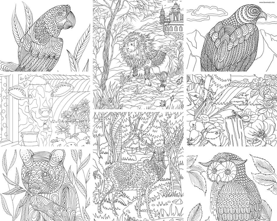 Animals and Birds – 10 Coloring Pages