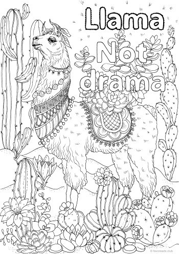 Llama, Not Drama