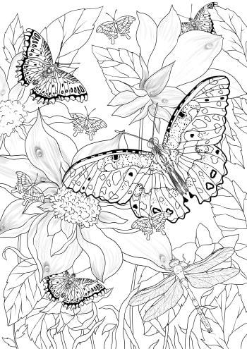 Pretty Butterflies